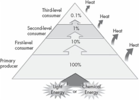 Energy Pyramid Percentages Cycling Matter ...